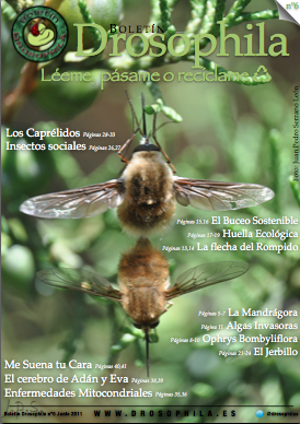 Revista número 6 Drosophila