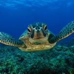 Las Tortugas dejan atrás los olores.