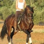 El caballo conoce por la brida al que lo conduce