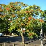El árbol del cielo