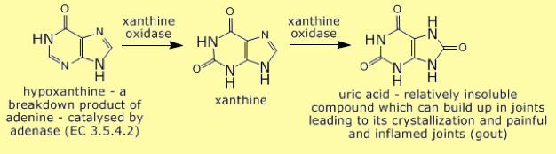 Ruta metabólica de formación del ácido úrico