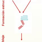Teorías de plegamiento de proteínas