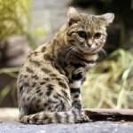 Los gatos más pequeños