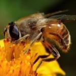 ¡Las abejas no son las únicas polinizadoras!