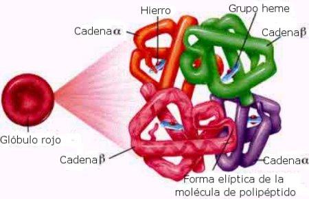 molecula_de_hemoglobina