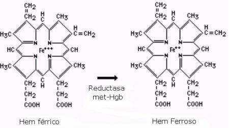 reductasa_hemoglobina