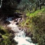 Agenda: Ruta Arroyo de Castillejo