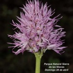 Agenda: Taller de identificación y fotografía de Orquídeas