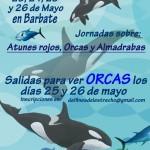 Jornadas de Atunes rojos, Orcas y Almadrabas en Barbate