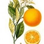 Factores ambientales que afectan al cultivo del naranjo.