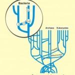 Transferencia horizontal de genes, descubriendo los transgénicos naturales.