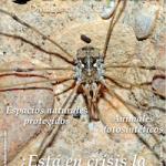 Boletín Drosophila, el número 12