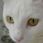 Desde los ojos de un gato