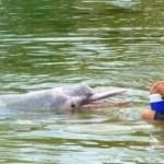 Nadando con delfines rosas