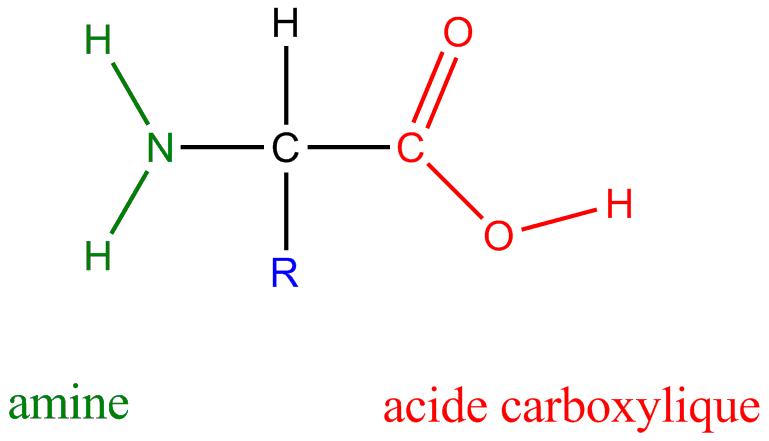 Estructura del aminoácido