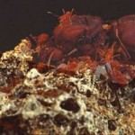 Hormigas ganaderas y agricultoras