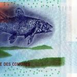 La biología en tu cartera: El Celacanto de las Comoras