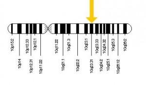 El gen PTEN se localiza en el brazo largo o q del cromosoma 10, más concretamente, ocupa la posición 23.3, señalada en imagen con la flecha.