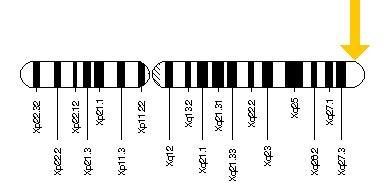 Cromosoma X mostrando zona mutación del gen MECP2