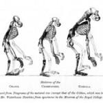 El simio que caminaba diferente