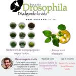 Biodiversos III: Micropropagación de plantas.