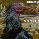 Boletín Drosophila: Número 21 disponible en papel y pdf