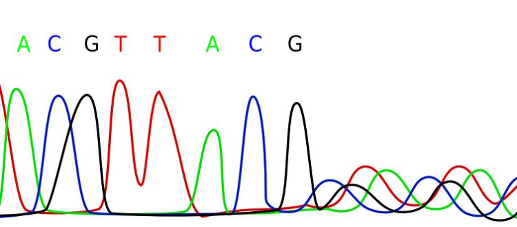 Material Genético - Secuenciación
