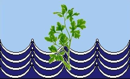Perejil bandera