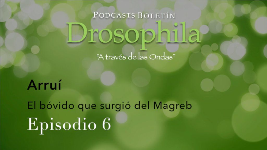 Podcasts Boletín Drosophila 6 Arruí