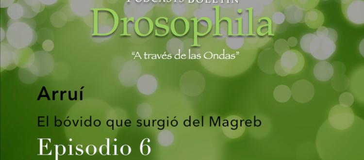 Podcasts Boletín Drosophila 6 Arruí