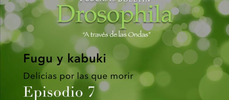 Podcasts Boletín Drosophila 7 Fugu y Kabuki