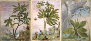 herbario